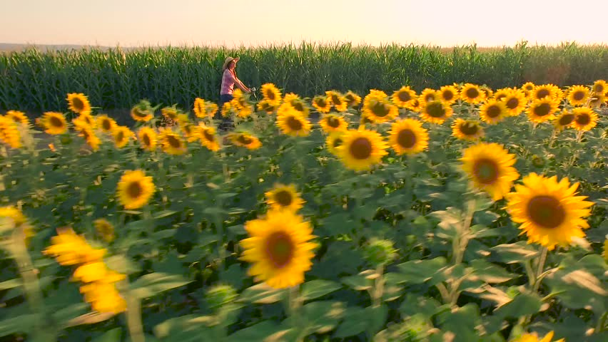 Beautiful Cowgirl Woman Riding Bicycle On Rural Road Agriculture Field Sunflowers Sun Shining Sunset Happiness Farming Life Countryside Beauty