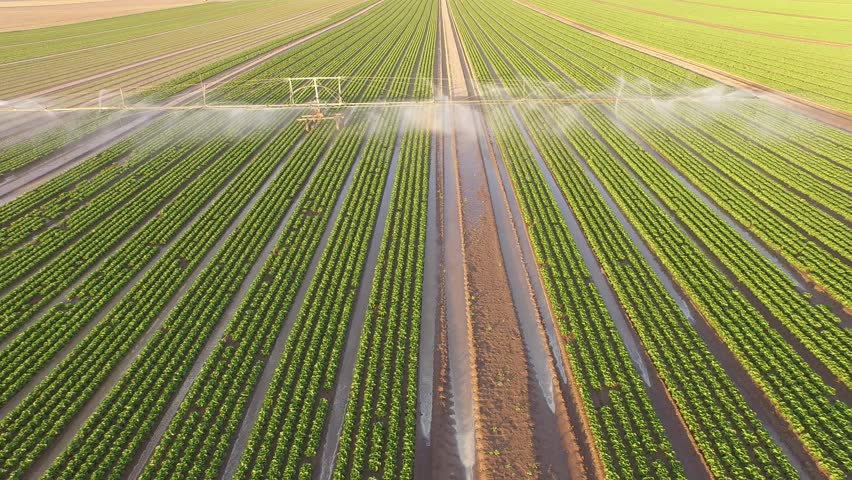 Industrial farming 4K Aerial video footage: Irrigation of a lettuce field in Europe in Summer.
