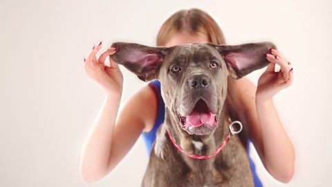 Woman hides behind dog with big ears and his tongue hanging out in studio