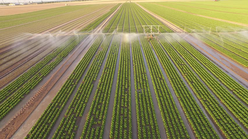 Aerial-video-footage from germany: Watering a lettuce field in summer