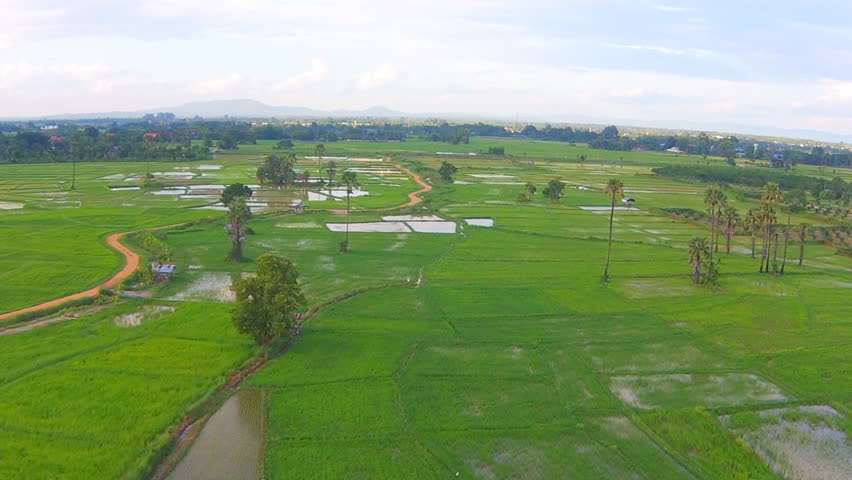 Aerial shot rice field