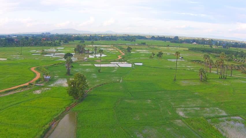 Aerial shot rice field  | Shutterstock HD Video #11365757