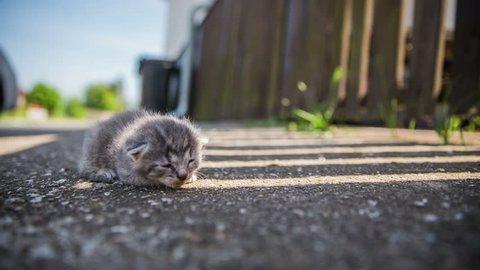 Abandoned baby kitty on asfalt. Abandoned gray kitten alone on floor. Sun shining behind on asphalt.