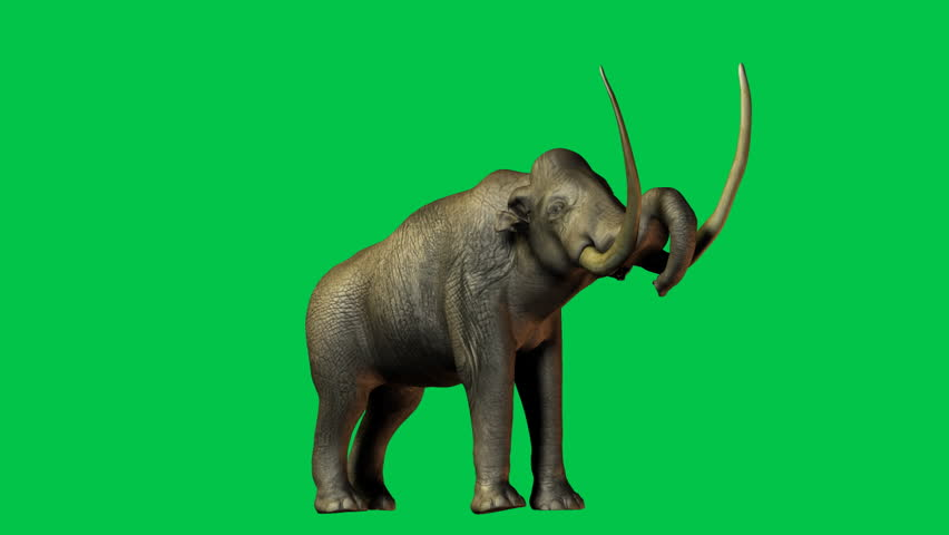 Colombian Mammoth - extinct species of elephant of the Quaternary period that appeared in prehistoric North America.  Green screen Animation