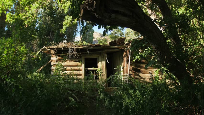 an abandoned decaying cabin sits in a overgrown forest in rural nevada 4k stock - Bamboo Garden 2016