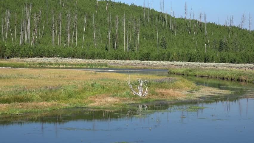 Yellowstone National Park, Madison River, flowers, beautiful quiet river