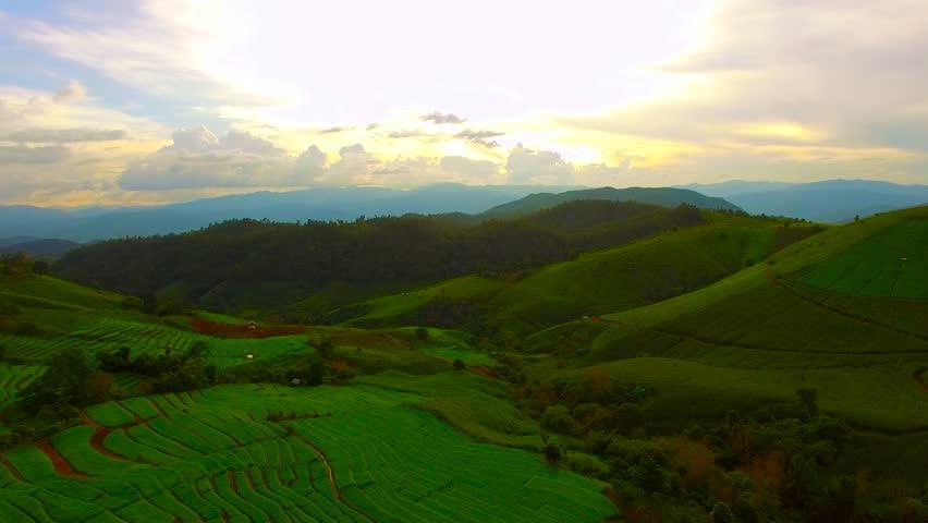 Rice Field Aerial Shot at north of Thailand. 4K #11710217