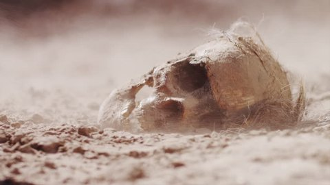 Ancient Skull in Desert