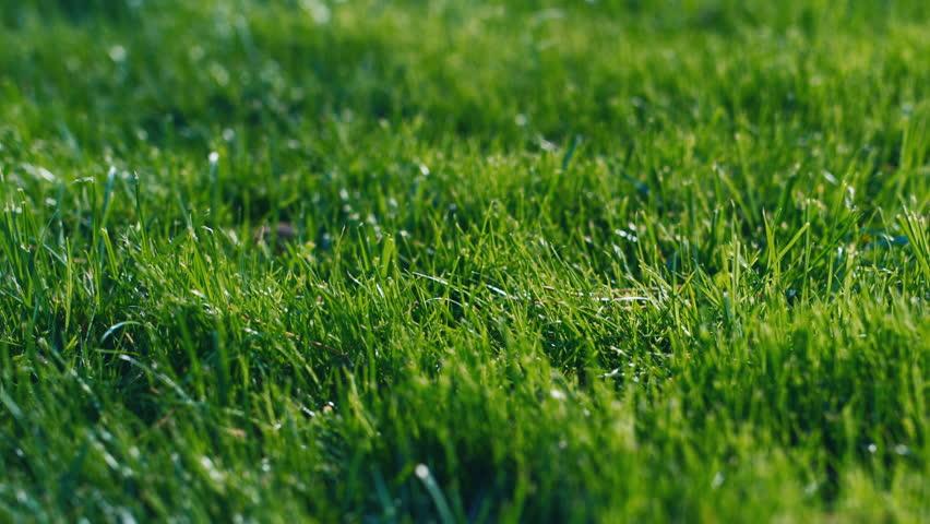 grass american football field. Green Grass For Background - HD Stock Footage Clip American Football Field E
