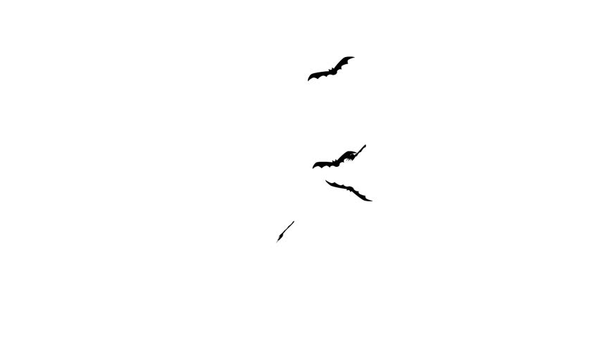 Bats flying isolated on white background