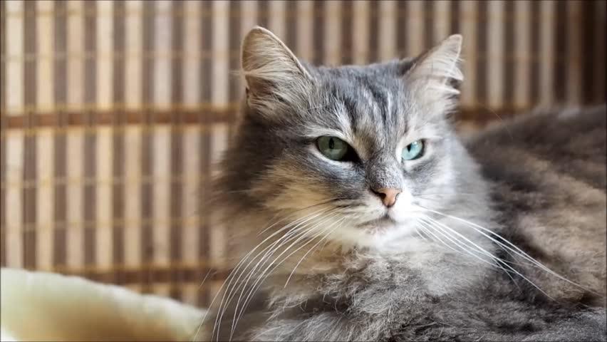 Кот с глазами по бокам