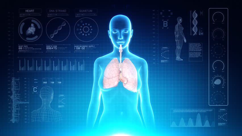 Female Respiratory System Anatomy on Virtual Futuristic Blue Touch Interface. Seamless loop. 4K Resolution Ultra HD