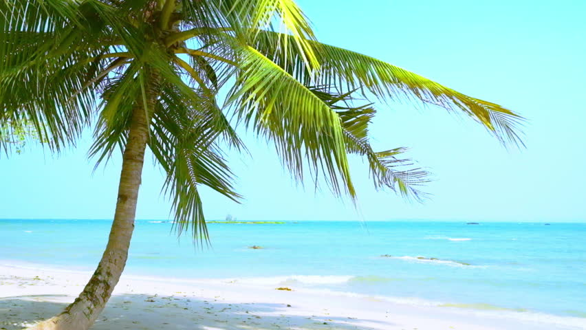 Sunny Tropical Beach Landscape With Palm Tree White Sand And Turquoise Ocean Waves Slow Motion Myanmar Burma Travel Landscapes Destinations Stock