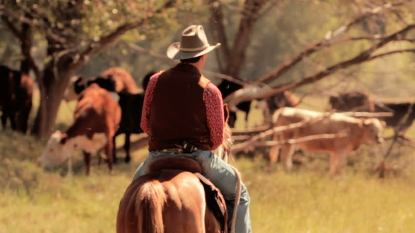 Cowboy and Cattle | Shutterstock HD Video #1238410