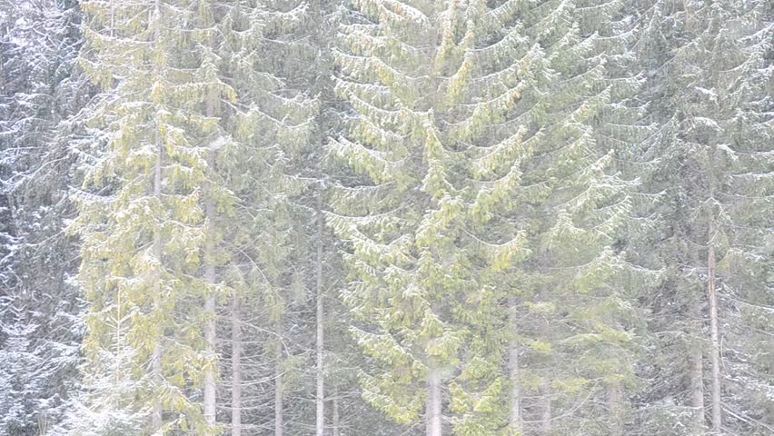 Heavy Snow Falls On Background Stock Footage Video (100% Royalty ...