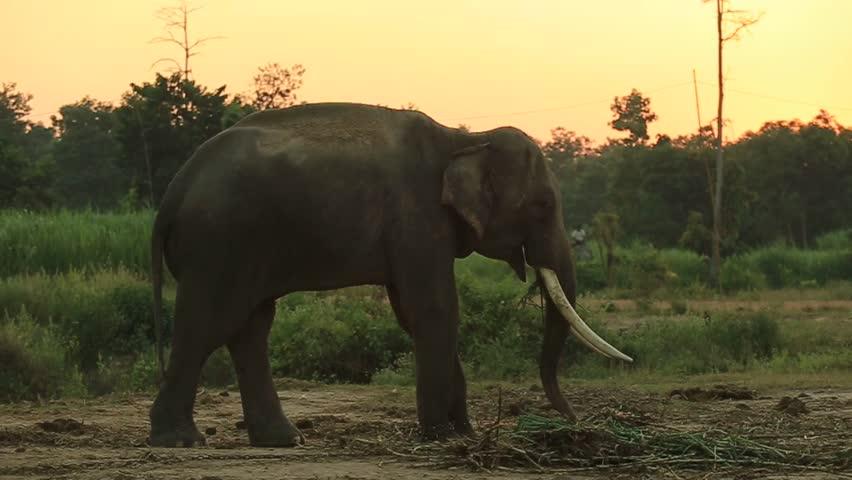 Sunset elephant on the park