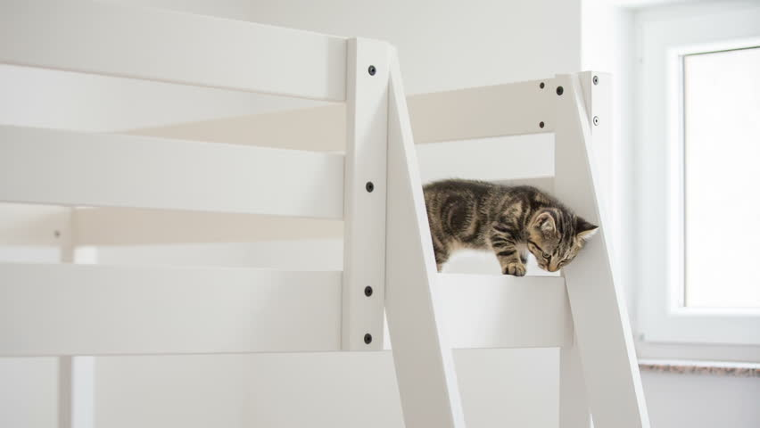 Kitten walking on wooden bed frame. Baby cat walking on a high wooden bed with fence around to prevent falling down. | Shutterstock HD Video #12716687