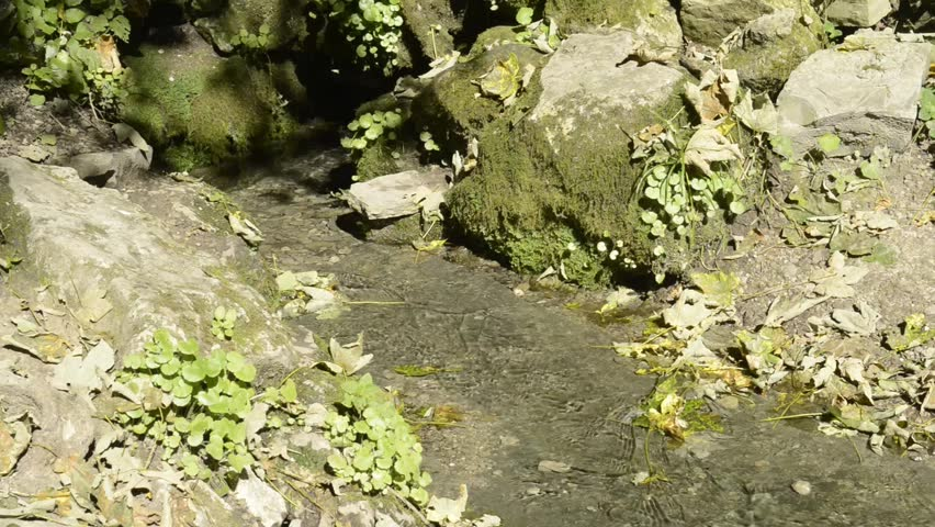 Mountain spring and murmuring brook.Playing of sunbeams in interweaving of trickles  of water stream | Shutterstock HD Video #12725087