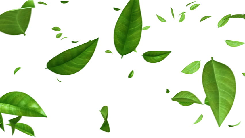 Green Leaves Flying on White Background. HD 1080. Looped. Alpha Mask. | Shutterstock HD Video #12741209