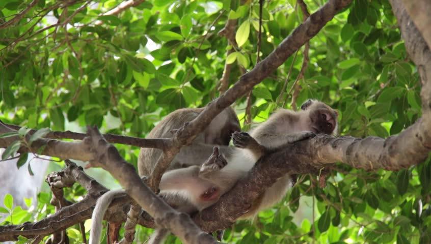 Ling Long Tyres wildlife in Songkhla long. | Shutterstock HD Video #12793397
