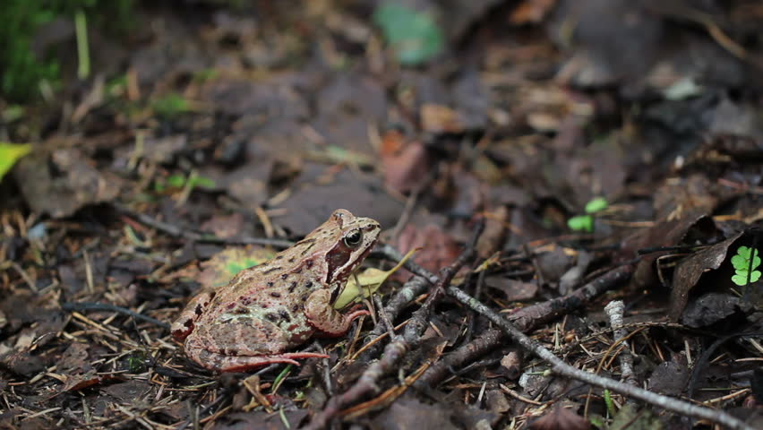 frog in the forest - 2 shots