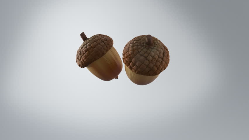 Two acorns falling in slow motion, bouncing on the floor and coming to rest.