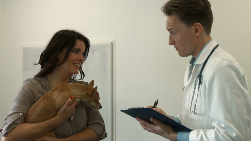 Dog owner speaking with the vet in high quality format | Shutterstock HD Video #13088507