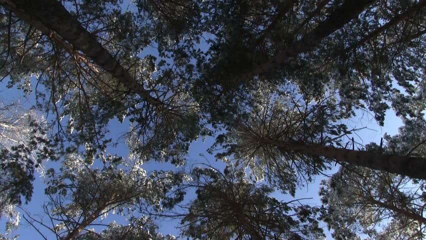 Big Pines Video