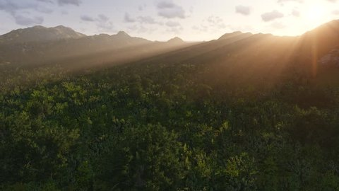 Flying over the treetops. Aerial view. Valley with thickets of tropical trees. Morning rays of the rising sun illuminate the landscape.