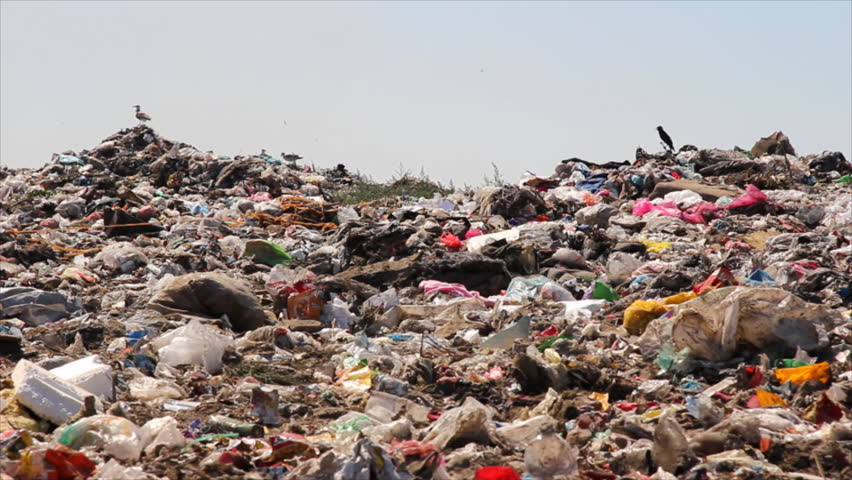 Pollution, crows and gulls on garbage | Shutterstock HD Video #1329007