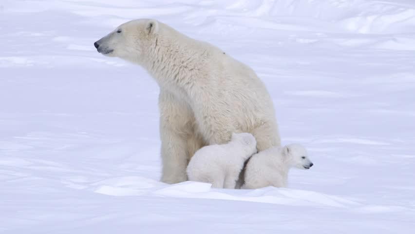 Yeah i know, i've been a real polar bear's ass