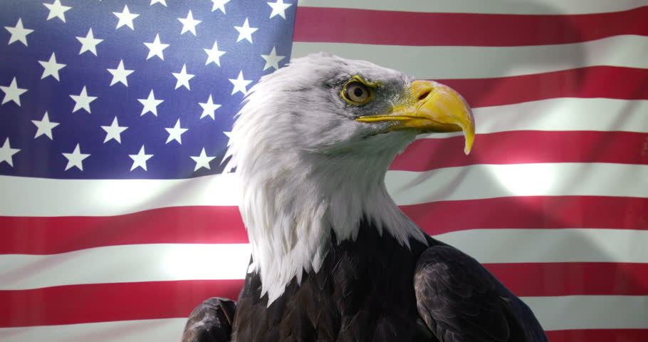 1e699b390f5b 4K Close up of American Bald Eagle against animated background of American  flag waving in the wind. Shot on RED Epic.
