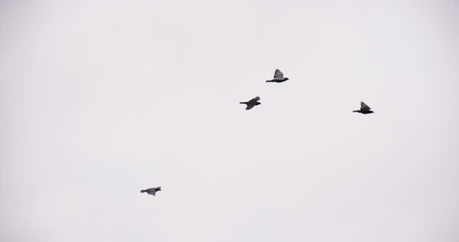 Stock Video Of Flock Of Birds Circling In The 10089725 Shutterstock