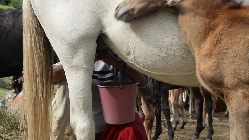 Kyrgyzstan.milking the Horse. Stock Footage Video (100%