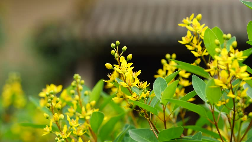 Small Yellow Flowers In Green Stock Footage Video 100 Royalty Free