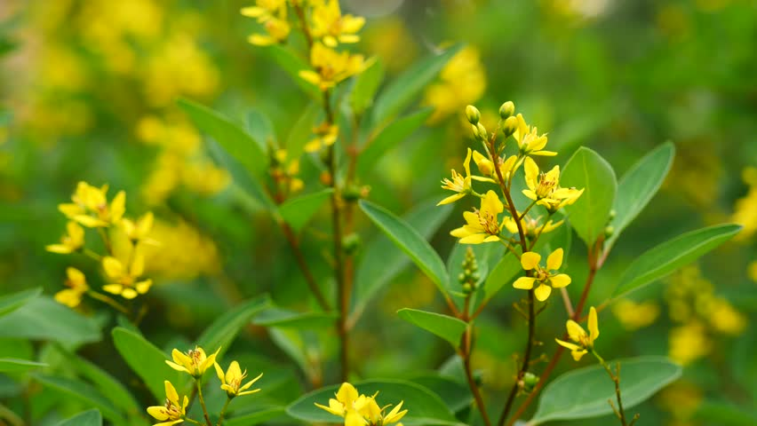 Yellow wild flowers in a green background stock footage video small yellow flowers in green leaves background 4k stock video clip mightylinksfo