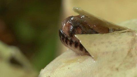 Pythons Hatching