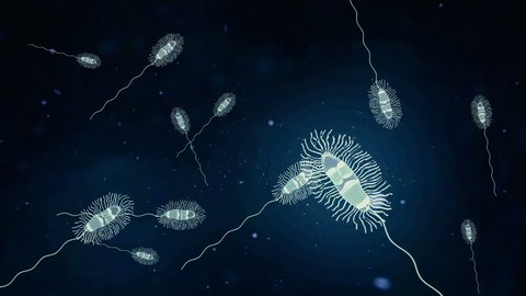 Bacteria with flagella swimming in water.