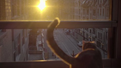 cat and tail silhouette watching sunrise in Manhattan apartment in NYC