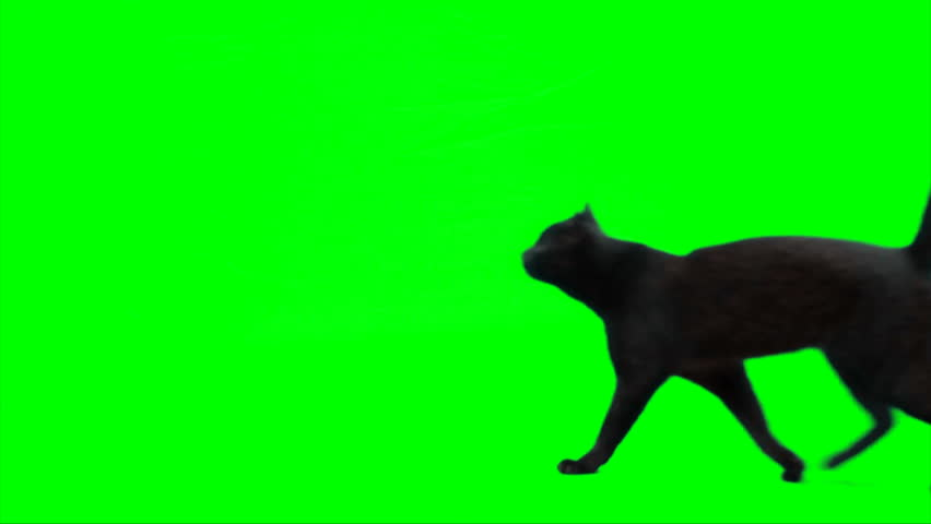 Cat walks from right side of screen to left side