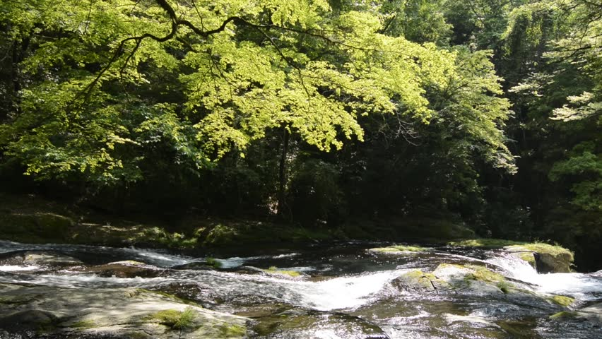 River flowing rock slope under flesh green painted maple tree | Shutterstock HD Video #14073647