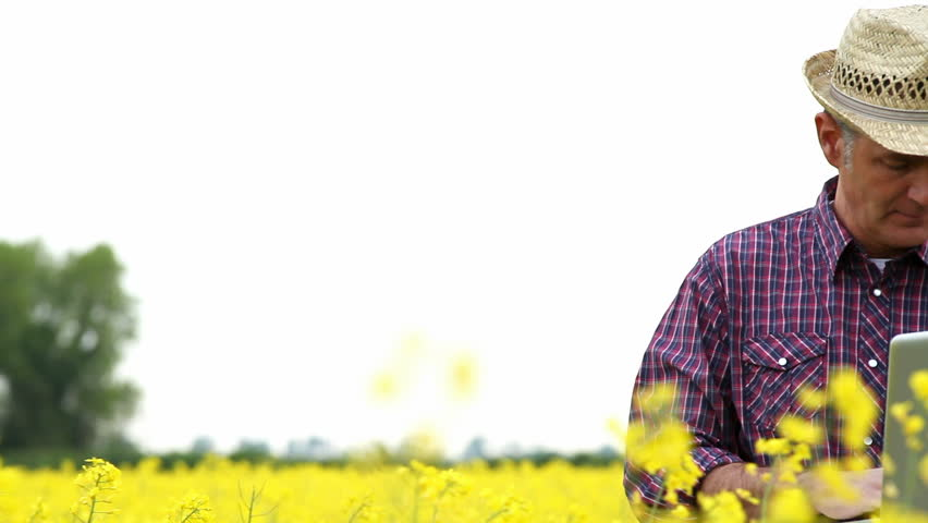 Farmer in a rape field, working on laptop; Full HD Photo JPEG