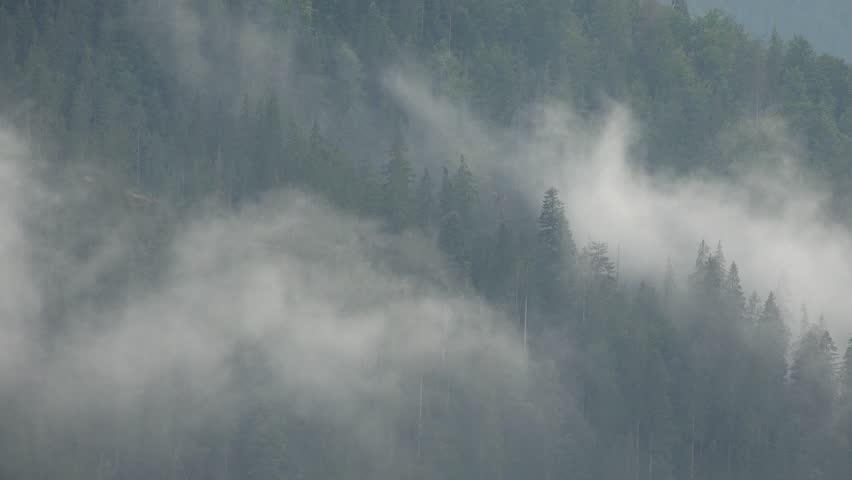 Header of Alpine Fir