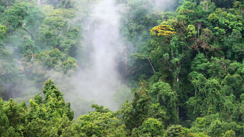 Humid climate of asian rainforest. Mist and fog among jungle forest canopy