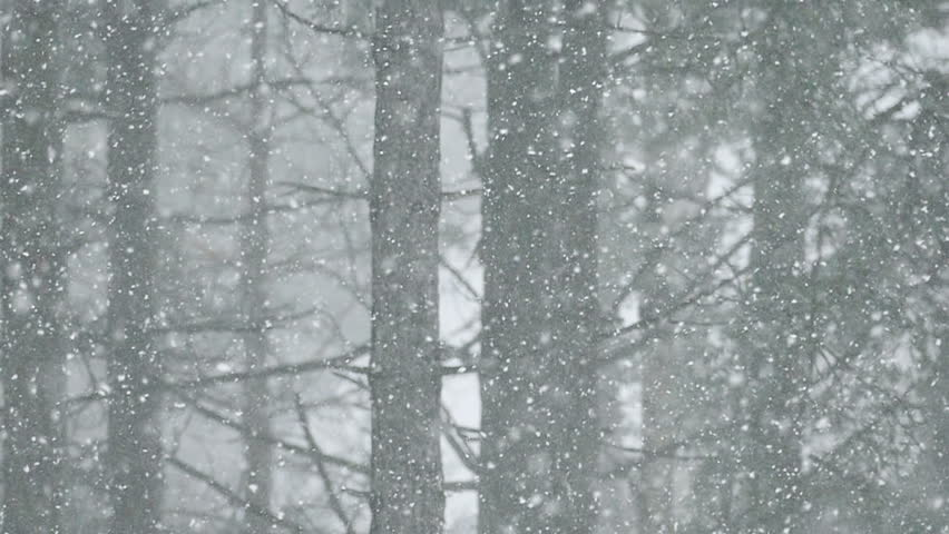 Snow blizzard in the forest ; Snow blizzard in the mountain forest,slow motion video clip
