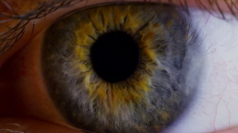 Human eye iris contracting. Close up.