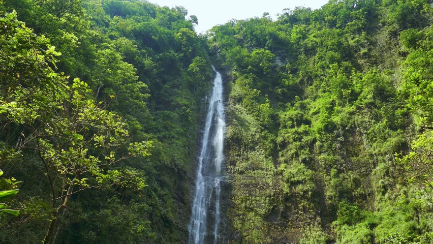 Rainforest On The Big Island: Footage Hawaii Waterfall Green Forest Nature Island Water
