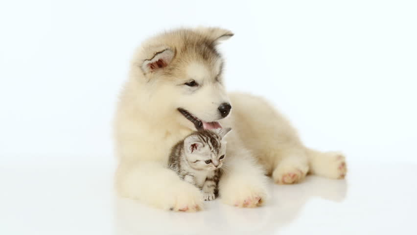 Puppy embracing tiny kitten