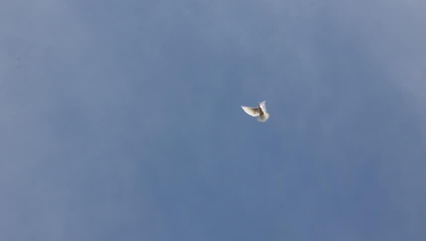 a white dove in the sky