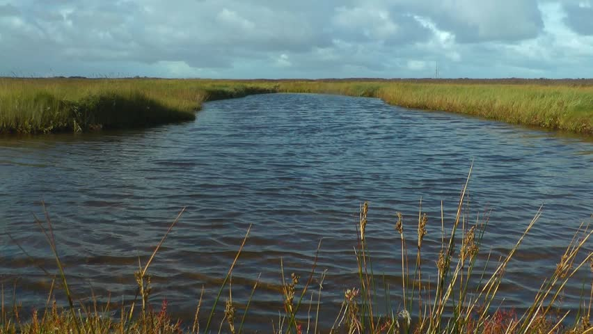 Swamp, intertidal mudflats, Borkum, North Sea, Germany